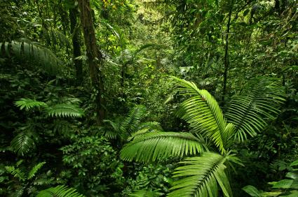Rainforest scene in Costa Rica